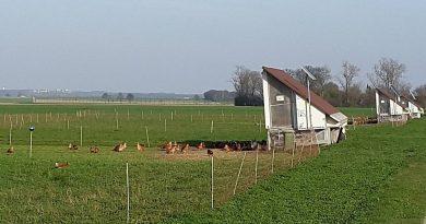 """Hühner wieder in """"Freiheit"""""""