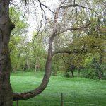 Das Ende einer Baumlegende – Der Elefantenbaum ist tot