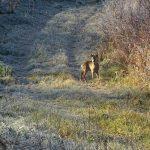 Bambi am Neffelbach